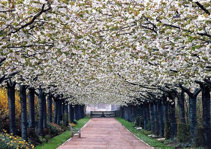 Valloires Abbey Garden, France